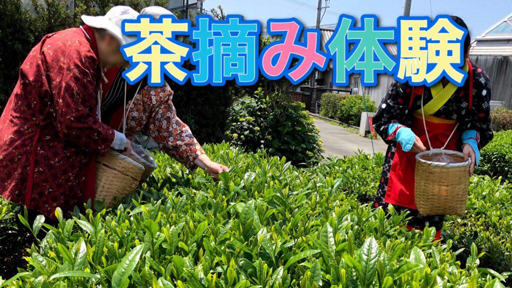 介護付き旅行サービス東京さんぽで行く茶摘み体験