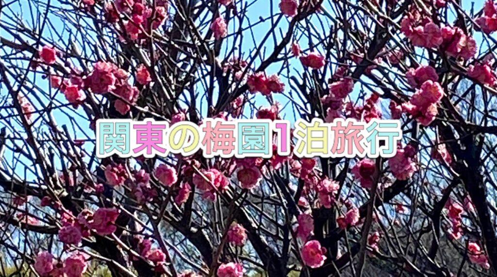 介護付き旅行サービス東京さんぽで行くお花見
