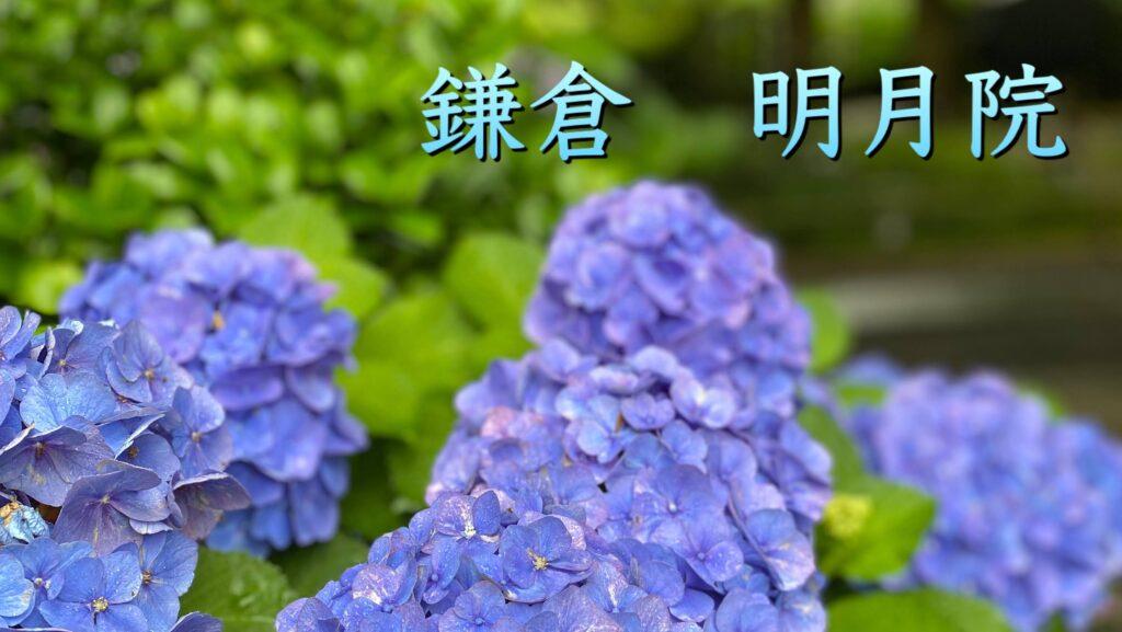 東京さんぽで行く介護旅行鎌倉明月院紫陽花さんぽ