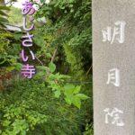 介護付き旅行サービス東京さんぽで行く鎌倉明月院